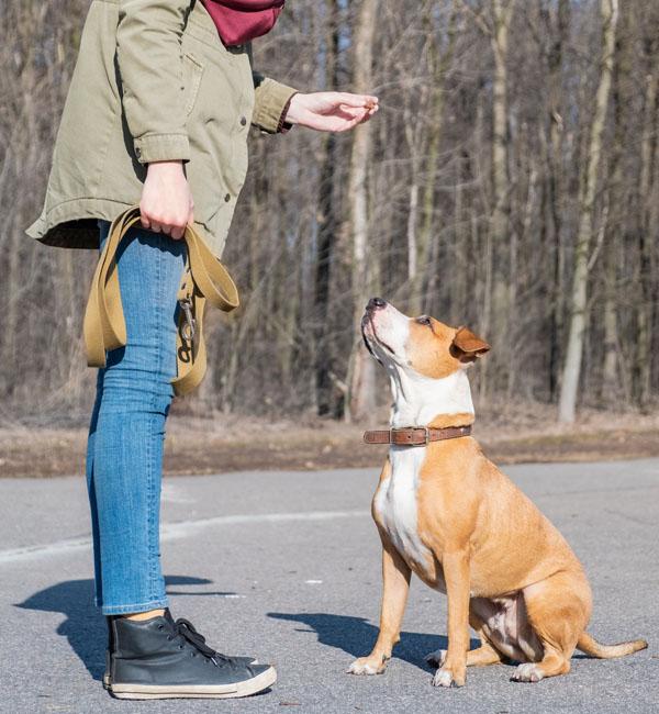 Modificacion de conductas caninas